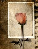 Grunge Rose Postcard Royalty Free Stock Images