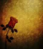 Grunge Rose Textured Background Stock Image