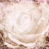 Grunge rosees background Stock Image