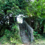 Grunge Ruin Stairs. Leading to Bright Heavily Cover with Green Plants Royalty Free Stock Photos