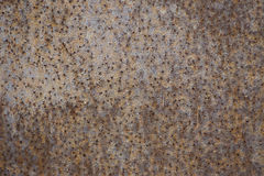Grunge rust metal plate Stock Images