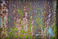 Grunge rusty iron with pieces of paint and moss Royalty Free Stock Image