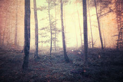 Grunge scary yellow red colored foggy forest background Stock Photography