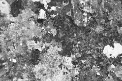 Grunge scratched mossy wall texture - pretty abstract photo background royalty free stock photography