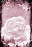 Grunge se levantó Imágenes de archivo libres de regalías