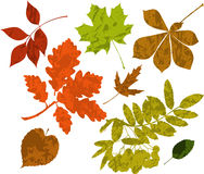 Grunge silhouettes of leaves. Stock Photos