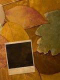 Grunge single photo frame Royalty Free Stock Photography