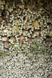 Grunge skulls Stock Images