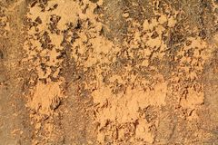 Grunge soil wall Royalty Free Stock Image