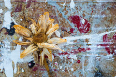 Grunge  splatter paint Abstract flower. Decaying flower on dried paint splatter grunge background Stock Photo