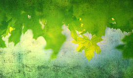 Free Grunge Spring Leaves Royalty Free Stock Photo - 40023865