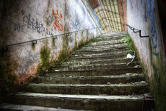 Grunge stairs Stock Image