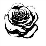 Grunge stamp rose Royalty Free Stock Image