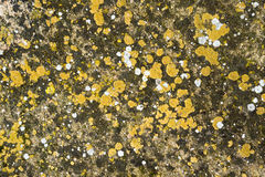 Grunge stone surface Royalty Free Stock Image
