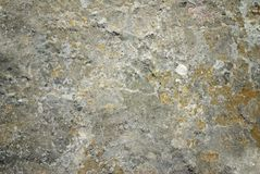 Grunge stone texture with moss Stock Images