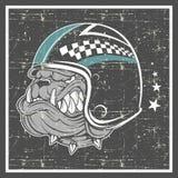 Grunge style bulldog wearing helmet vector illustration