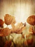 Grunge style photo of poppy flower field royalty free stock image