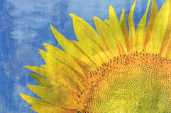 Grunge sunflower Stock Photography