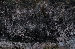 Grunge svart vägg Royaltyfria Foton