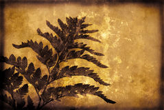 grunge tła roślinnych Obrazy Royalty Free