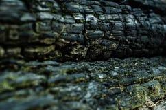 grunge Textura de madeira queimada Fundo preto Foto de Stock Royalty Free