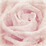 Grunge texture with floral background with soft selective focus, shallow depth of field. Macro shot of beautiful pink rose flower stock photography