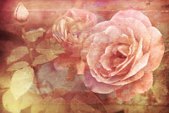 Grunge texture with floral background in vintage style. Romantic. Pink roses flowers with water drops growing in garden Stock Image