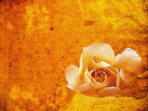 Grunge texture with orange floral background Royalty Free Stock Image