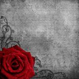 Grunge texture  with red Rose Stock Photos