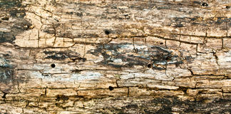 Grunge of texture wood Royalty Free Stock Photos