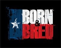 """Texan Flag - Born n Bred. Grunge Textured Illustration of the phrase """"Born and Bred` depicted as a Texan Flag. Custom Lettering royalty free illustration"""
