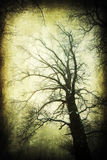 Grunge textured picture of a snow covered tree royalty free stock photo