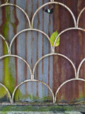 Grunge textured rusty steel metal with Green leaf in white grille. Multi textured rust, steel, and mossy metal background with white scale shaped grille in front Royalty Free Stock Image
