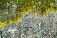 grunge textuur, achtergrond: oude die muur met mos wordt behandeld stock foto's