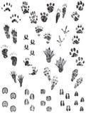Grunge Tier-Spuren Stockbild