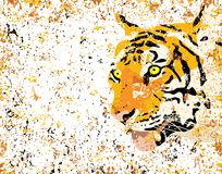Grunge tiger Royalty Free Stock Image