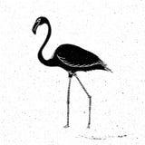 Grunge tirado mão do flamingo Imagens de Stock Royalty Free