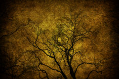 Grunge tree. A grunge tree textured in the sky Stock Images