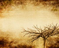 Grunge Tree. An old tree done in sepia with a grunge vignette Stock Images