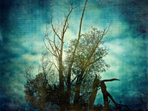 Grunge tree background Stock Photo