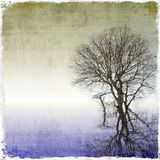 Grunge tree background Royalty Free Stock Photos