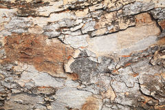 Grunge tree bark texture Stock Images