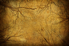 Grunge Tree Branches Upon Sky Royalty Free Stock Photography