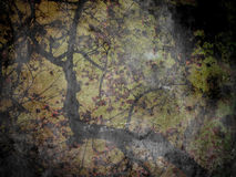 Grunge Tree Horrible Background Royalty Free Stock Image