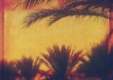 Grunge tropikalny tło z kokosowymi drzewkami palmowymi Obrazy Royalty Free