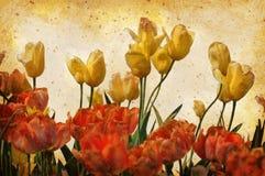grunge tulipanów rocznik zdjęcia royalty free