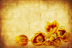 Grunge Tulips Stock Images