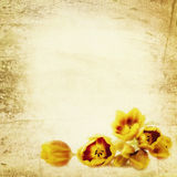 Grunge Tulips Background royalty free stock photo