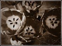 Grunge Tulips Photo Royalty Free Stock Photography