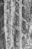 Grunge tyre textured pattern Royalty Free Stock Image